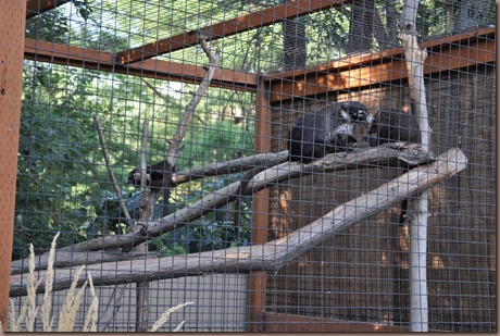 08-17-16 Boise Zoo 03