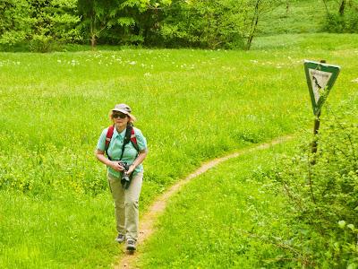 Kleines Naturschutzgebiet mit Orchideenwiese