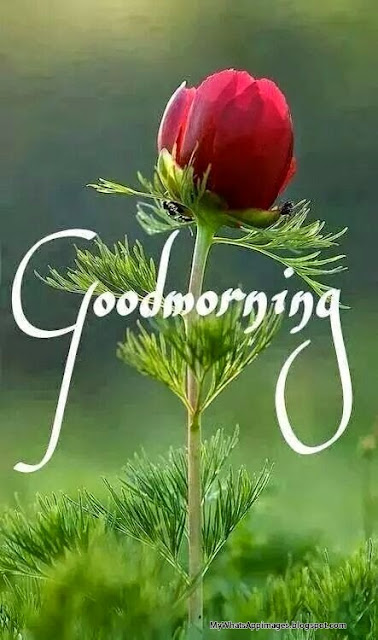 Good Morning Wording Wishes for Whatsapp