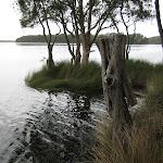 Edge of Myall Lake