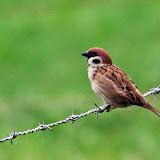 Vogels en dieren - IMG_6343.JPG