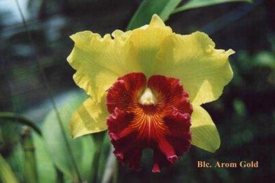 Растения из Тюмени. Краткий обзор - Страница 9 BlcAromGold_l
