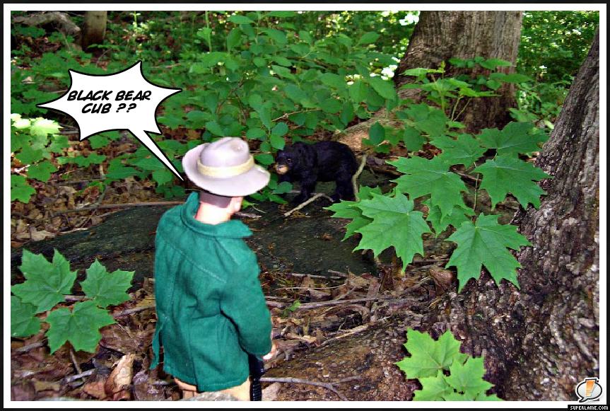 Black Forest Bear MySuperLamePic_a3594058c2a77818f2e6b741aeaecd66