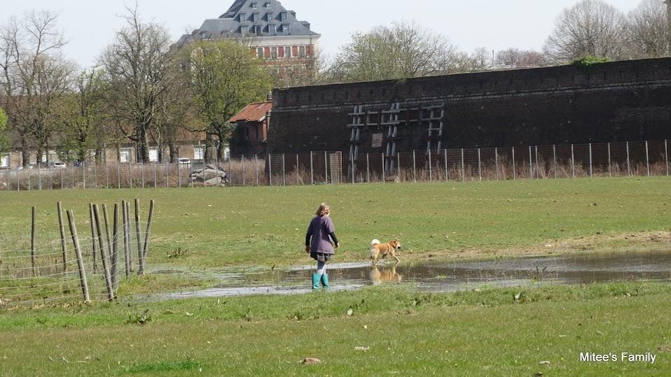 Balades canines en Nord (59)/Pas de Calais (62) - Boulogne-sur-Mer, Calais et Lille - Page 4 DSC01879