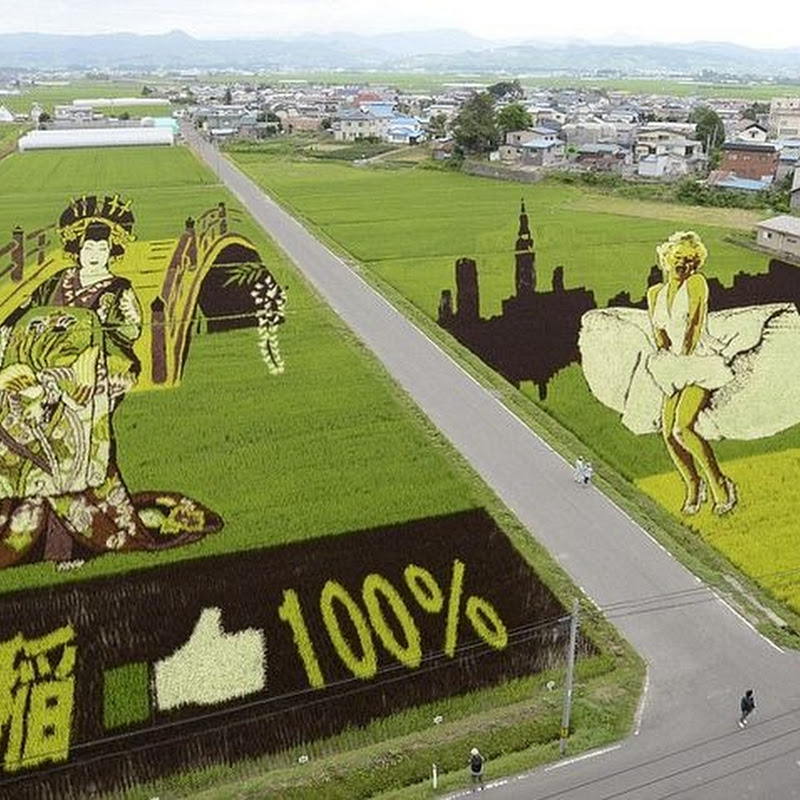 The Rice Paddy Art of Japan