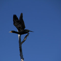 Fowl Marsh from Boat Feb3 2013 127