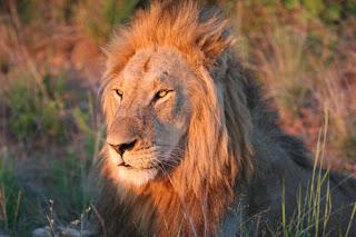 Krugerjev park, Južna Afrika