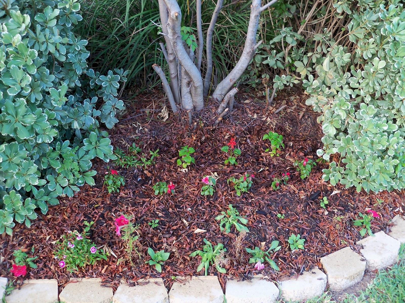 Gardening 2012 - 115_2029.JPG
