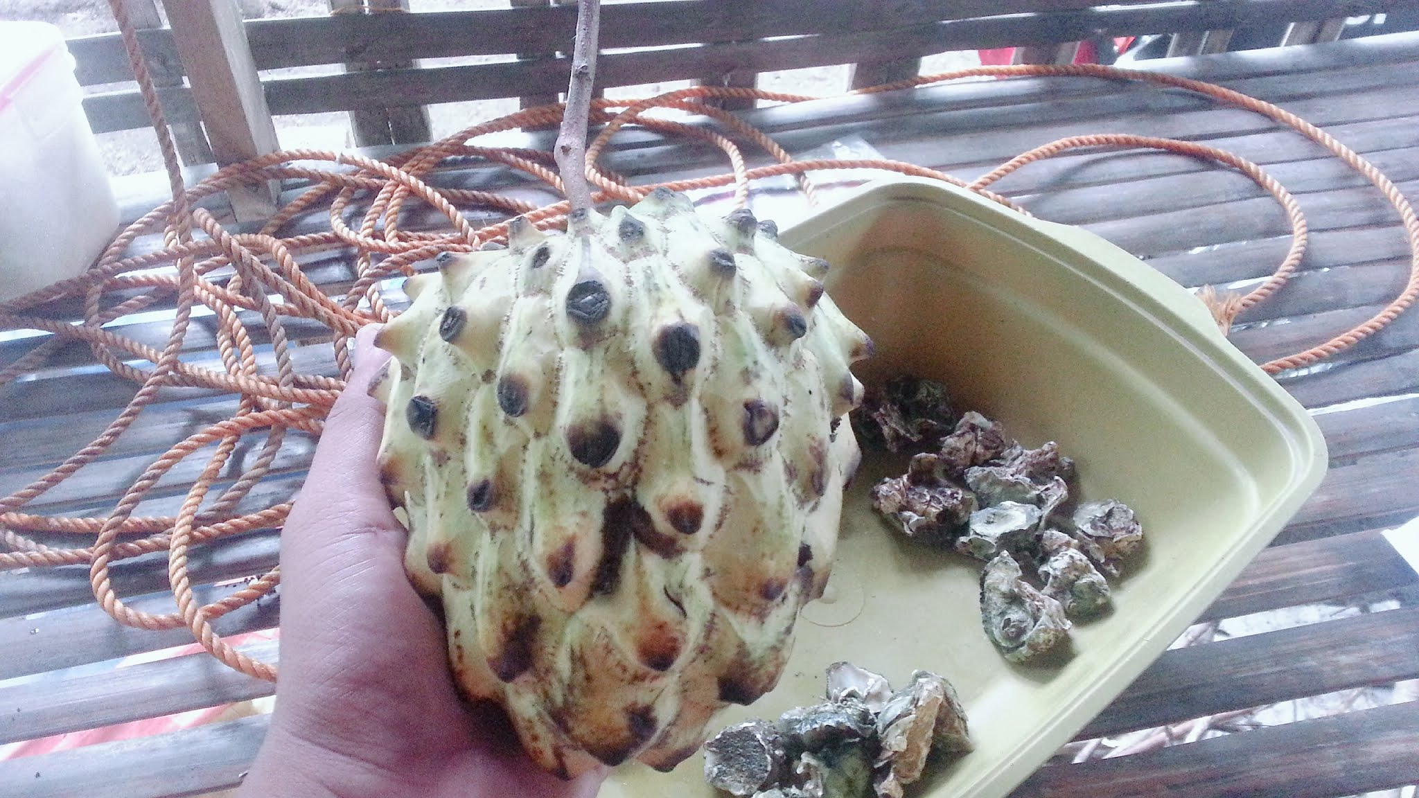 Image of Devil Fruits, ‎Paramecia Devil Fruit Users, ‎Artificial Devil Fruit, ‎Ito Ito no Mi, Awakening of Devil fruit, Devil fruits