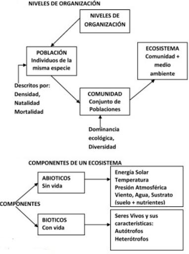 niveles organización ecosistemas