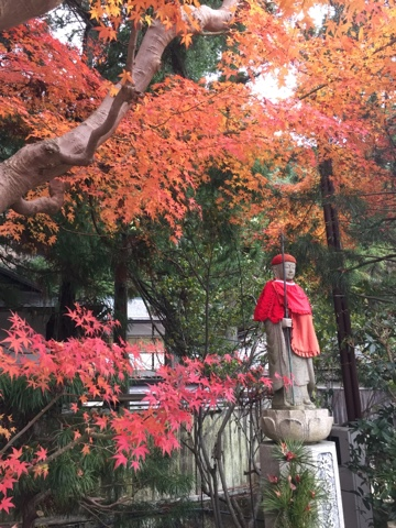 Fall leaves in Koyasan, Japan