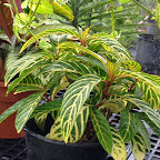 plant371514.jpg