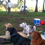 Dynamite Danes Family Album #5 - dogs%2Bcamping.jpg