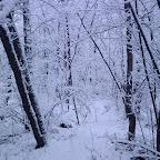 Зимняя уборка в Дендрарии 075.jpg