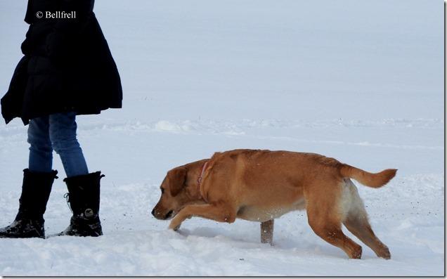 DSCN2735 Hund