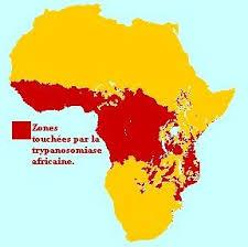 Image result for mouches tsé tsé en afrique de l'est