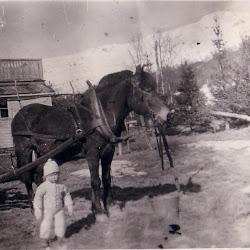 Harry og hesten