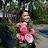 Nedine Dela Cruz avatar image