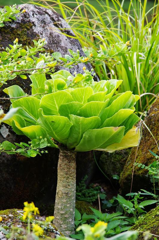 06-26-13 National Tropical Botantial Gardens - IMGP9448.JPG