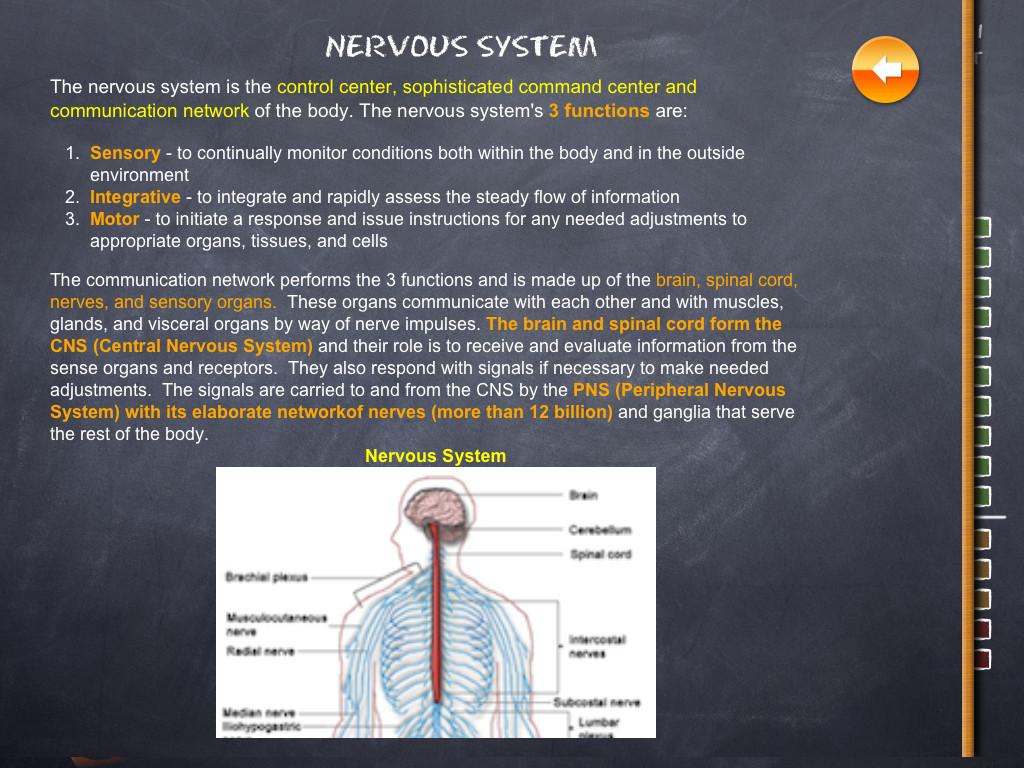 iTooch Elementary School Nervous System
