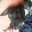 anai chagoya's profile photo