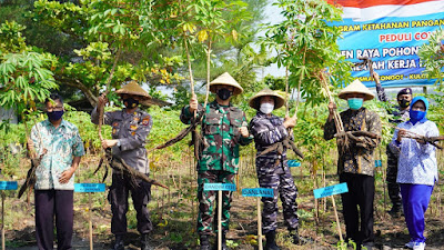 Dandim 0731/Klp Hadiri Panen Raya Ketela, TNI AL Peduli Pandemi Covid 19
