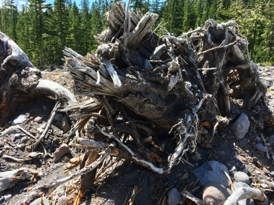 Torn and fallen tree on the glacier valley bottom
