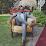Thabani Zulu's profile photo