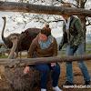 Ферма за щрауси в Долна Баня - Даниелка е смела с щраусите