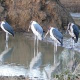 Kruger park jour 2