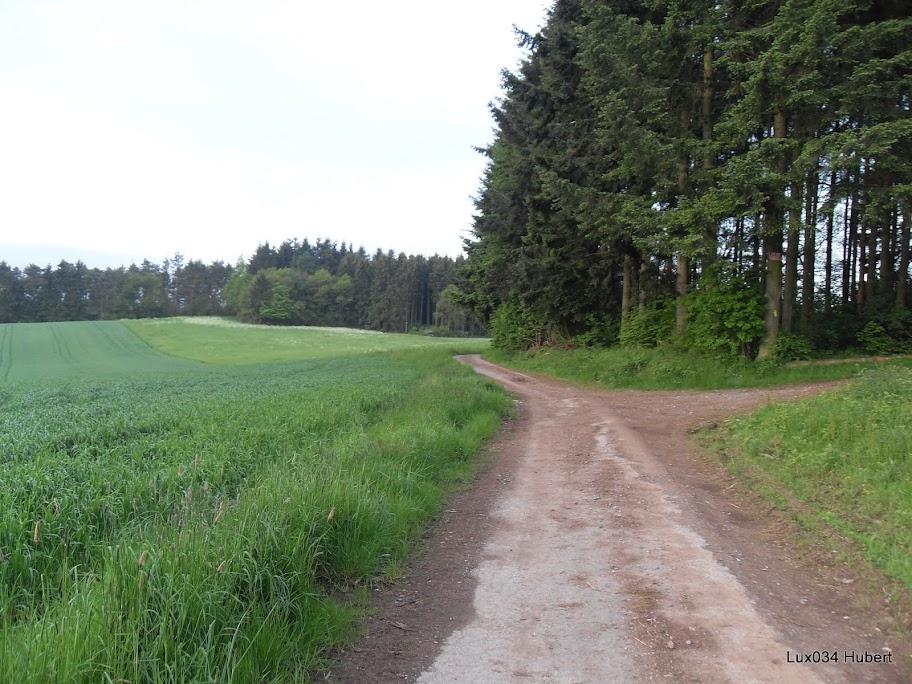"""75km, etc. """"Sentiers Ardennais"""" à Masbourg (B): 18 mai 2013 SDC15785"""