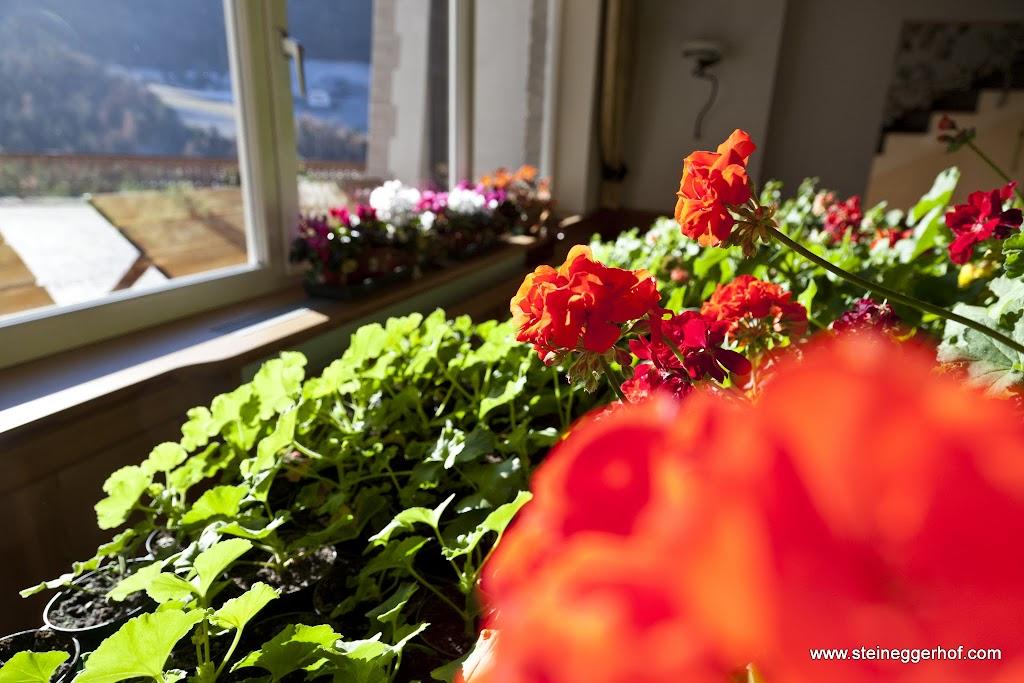 Geranien Hotel Steineggerhof 01.01.16-4219.jpg