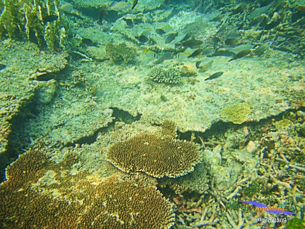 pulau harapan 8-9 nov 2014 diro 21