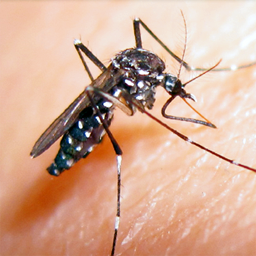Malattie trasmesse da vettori e sorveglianza delle febbri estive