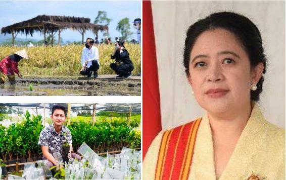 Biar Tidak Punah, Pemerintah Sarankan Hidupkan Petani Muda, Puan Maharani Singgung Kesejahteraan