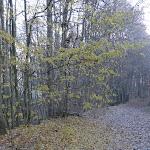 Bois de Vossery : chemin recouvert de feuilles de chêne
