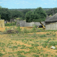 Remote village seen near Shakawe