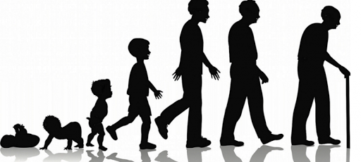 Kitaran umur manusia