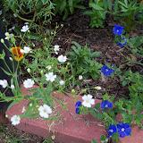 Gardening 2010, Part Three - 101_3755.JPG