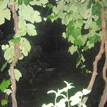 Taborjenje, Lahinja 2005 1. del - Taborjenje05.Nina%2B363.jpg