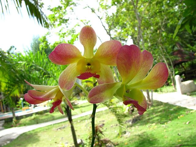 Из зимы в лето. Филиппины 2011 - Страница 3 IMG_0011%252520%2525283%252529