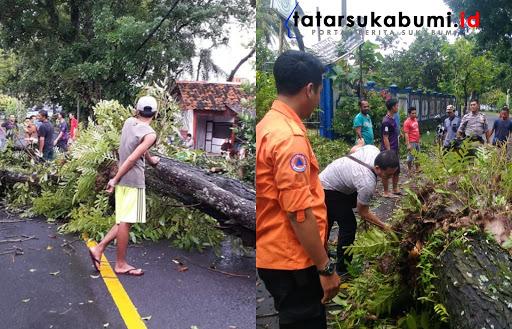 Pohon Tumbang di Ruas Jalan Palabuhanratu - Cisolok