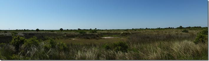 Dry marsh-pano