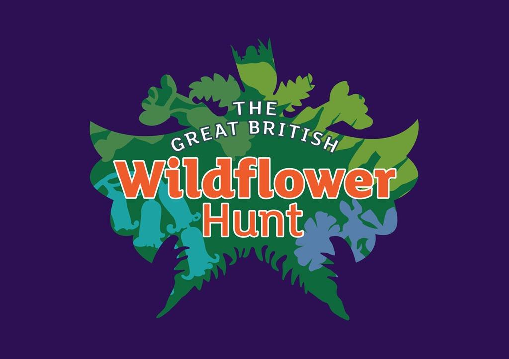 [Wildflower-Hunt-2%5B3%5D]
