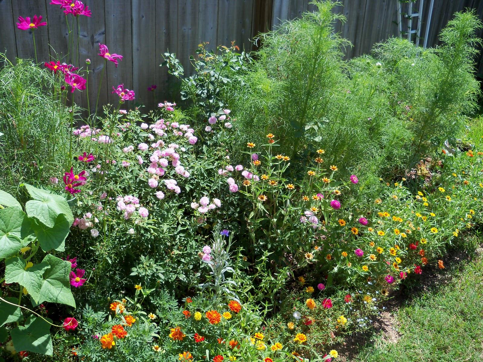 Gardening 2010, Part Three - 101_4384.JPG
