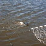 20160724_Fishing_Grushvytsia_008.jpg