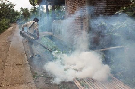 penyebaran nyamuk chikungunya wilayah jawa timur dan fogging
