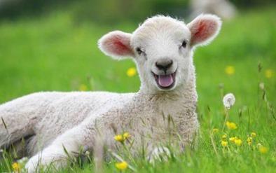 https://lh3.googleusercontent.com/-xnZIoMRrvFY/V-9QExNZ_oI/AAAAAAAB9A0/EmAuXqXWzeg/Lamb-in-the-grass-567099_thumb%25255B1%25255D.jpg?imgmax=800