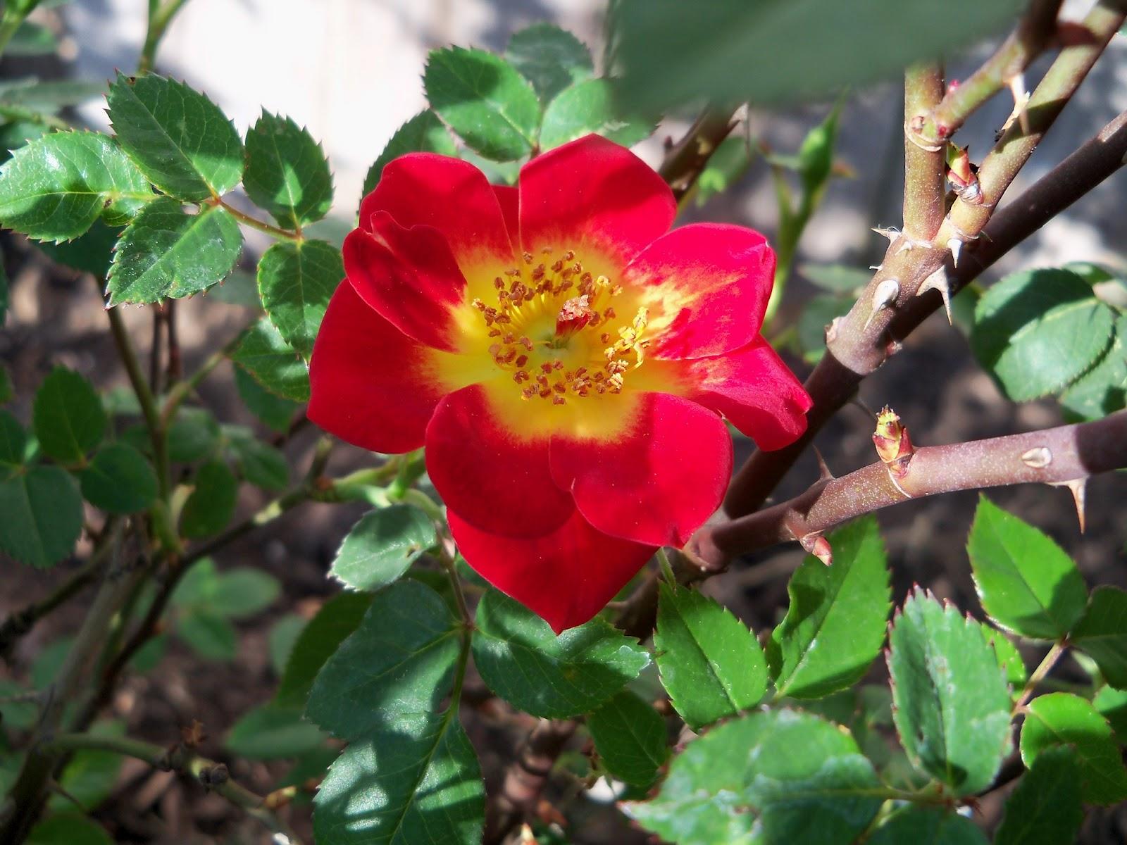 Gardening 2011 - 100_6873.JPG