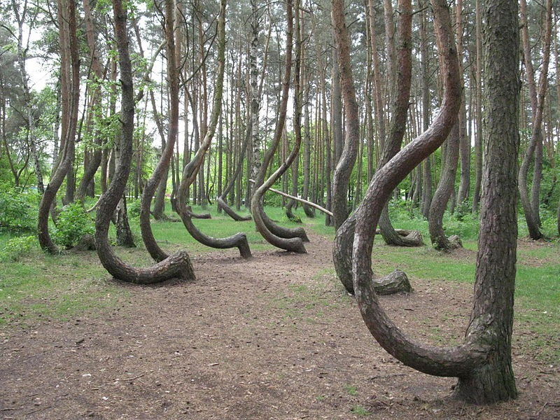 crooked-forest-poland-4